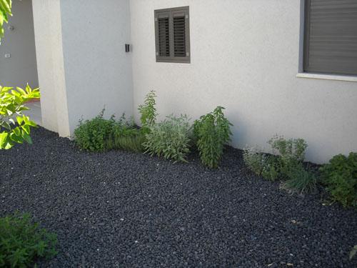 גינת תבלינים בחזית הבית