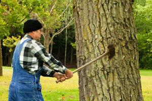 איש כורת עץ בגינה ביתית (אילוסטרציה)