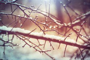 הגינה בחורף